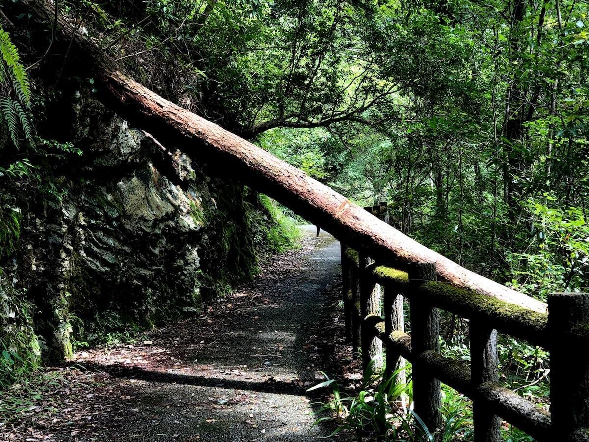 中津渓谷の倒木